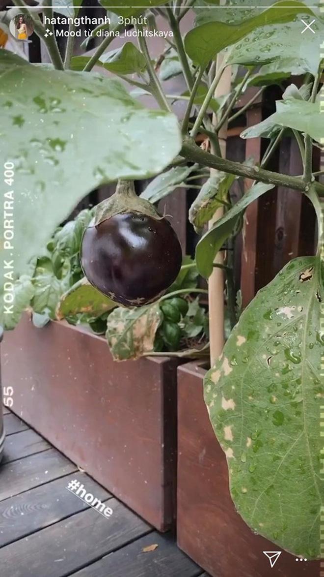Loạt sao Vbiz hoá bác nông dân tự trồng trọt và chăn nuôi mùa dịch: Choáng nhất là khu vườn trong biệt thự 21 tỷ của Quyền Linh! - Ảnh 10.