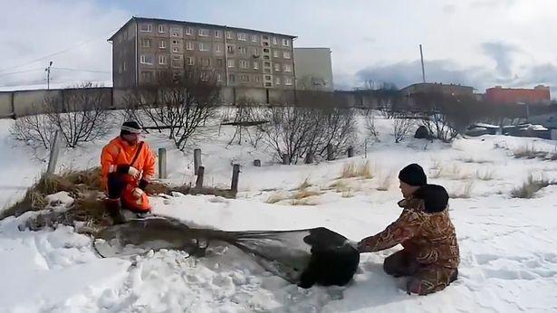 Chú chó kiên quyết nằm 2 tháng trên mặt băng lạnh, khi biết lý do ai cũng nghẹn ngào - Ảnh 3.