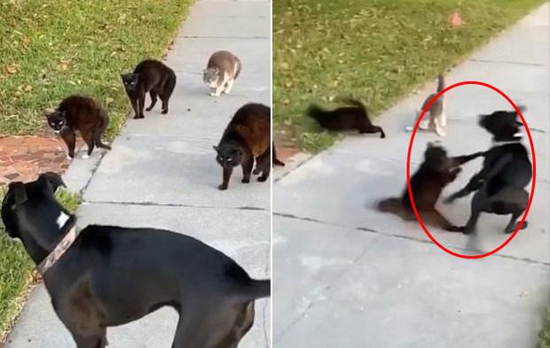 Đi lạc vào chỗ các boss mèo đang chill, chú chó tội nghiệp bị cả băng đảng đuổi chạy tóe khói - Ảnh 3.