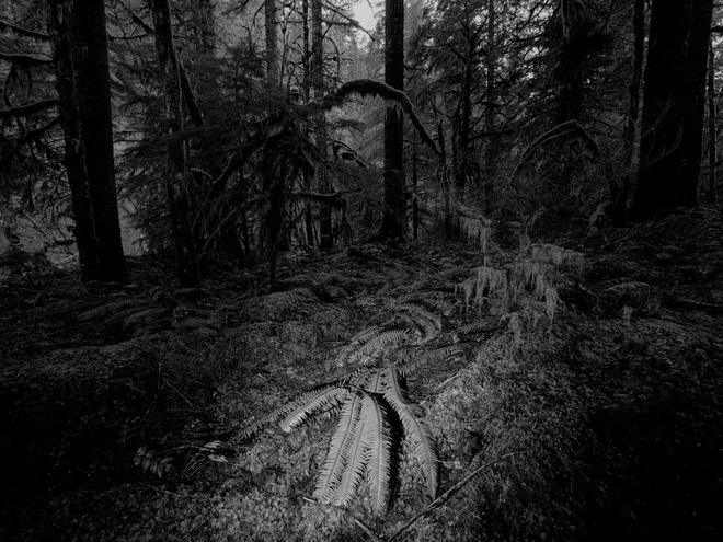 Bộ ảnh diệu kỳ từ thiên nhiên: Nếu  ngắm đủ lâu, ngẫm đủ kỹ bạn sẽ đọc được bí mật này - Ảnh 8.