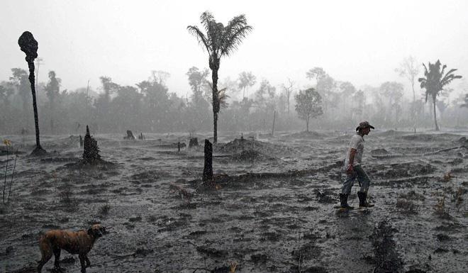 Rừng Amazon vẫn đang cháy ngày càng dữ dội hơn: 1.202 km2 rừng bị xóa sổ trong 4 tháng, ngang bằng diện tích một quốc gia - Ảnh 3.