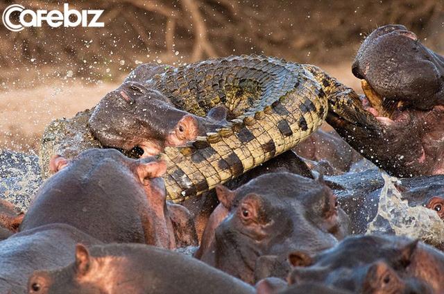 Cuộc đi săn mồi của cá sấu và bài học khởi nghiệp: Dùng thuật ẩn mình để tìm thị trường ngách, tấn công chớp nhoáng chinh phục thị trường - Ảnh 2.