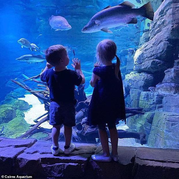 Vắng bóng con người, đàn cá ở thủy cung Queensland bỏ ăn vì cô đơn - Ảnh 2.