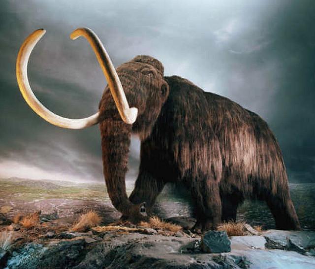 Phát hiện cấu trúc khổng lồ được làm từ xương voi ma mút 25.000 năm trước - Ảnh 1.