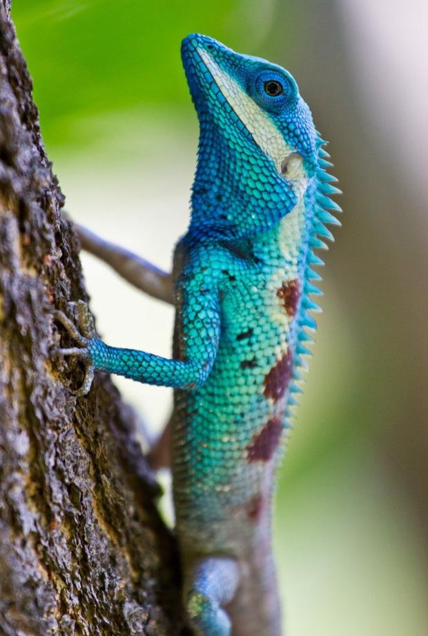 Chỉ tồn tại một loài vật duy nhất trên đời có màu xanh lam - vì sao sắc màu này lại hiếm đến vậy? Đây là câu trả lời - Ảnh 2.