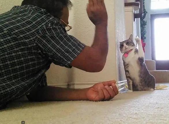 Biểu cảm đầy cảnh giác của boss khi lần đầu tiên được bố sen cưng nựng gây sốt MXH, thì ra lũ mèo có rất nhiều chiêu để lấy lòng phụ huynh! - Ảnh 6.