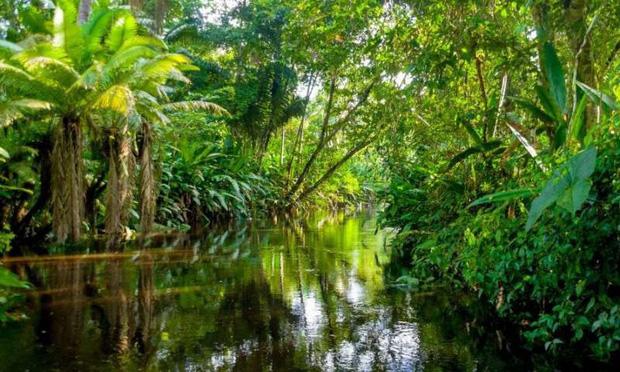 Cảnh báo đáng sợ: Sau khi hết Covid-19, rừng Amazon sẽ là nguồn lây nhiễm virus corona kế tiếp và lỗi hoàn toàn nằm ở con người - Ảnh 3.