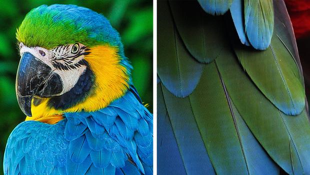 Chỉ tồn tại một loài vật duy nhất trên đời có màu xanh lam - vì sao sắc màu này lại hiếm đến vậy? Đây là câu trả lời - Ảnh 4.