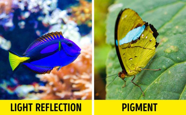 Chỉ tồn tại một loài vật duy nhất trên đời có màu xanh lam - vì sao sắc màu này lại hiếm đến vậy? Đây là câu trả lời - Ảnh 5.