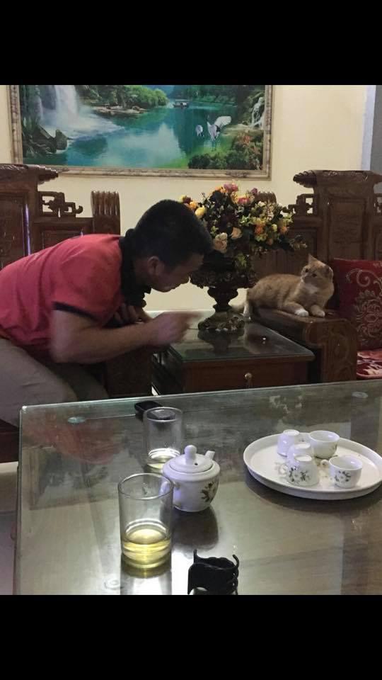 Biểu cảm đầy cảnh giác của boss khi lần đầu tiên được bố sen cưng nựng gây sốt MXH, thì ra lũ mèo có rất nhiều chiêu để lấy lòng phụ huynh! - Ảnh 10.
