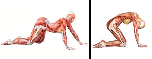 Yoga trị liệu: Chuyên gia Yoga Ấn Độ chỉ cách kiểm soát đau lưng và bài tập để hồi phục - Ảnh 4.