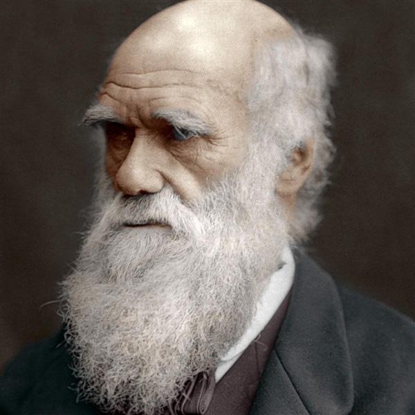 Sở thích ăn uống lạ lùng của Darwin - Ảnh 1.