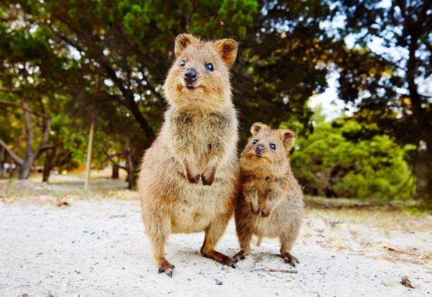 Chùm ảnh thiên nhiên kì dị ở Úc gây tò mò với người nước ngoài nhưng lại khiến dân bản địa phải nhiều phen khóc thét - Ảnh 19.