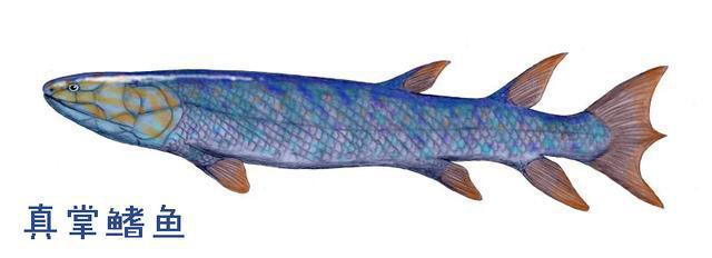Tại sao xương vây của cá voi có năm ngón trông giống bàn tay con người? - Ảnh 8.