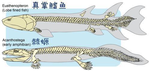 Tại sao xương vây của cá voi có năm ngón trông giống bàn tay con người? - Ảnh 9.