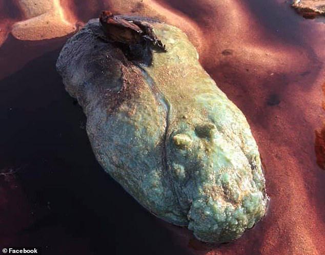 Video: Quái vật biển không mắt, không mồm cực độc tiết dịch nhầy kinh sợ trên cạn - Ảnh 2.