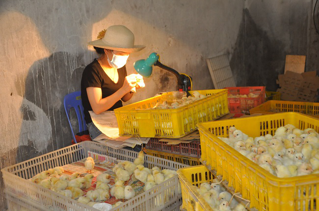 Nghề lạ mỗi ngày kiếm cả triệu đồng nhưng luôn khát người làm ở Hà Nội - Ảnh 1.