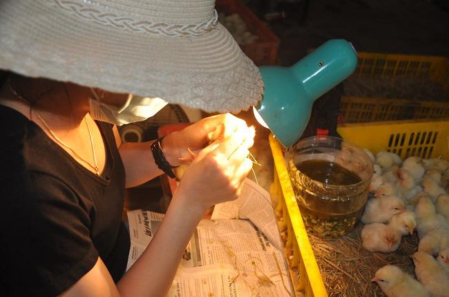 Nghề lạ mỗi ngày kiếm cả triệu đồng nhưng luôn khát người làm ở Hà Nội - Ảnh 2.