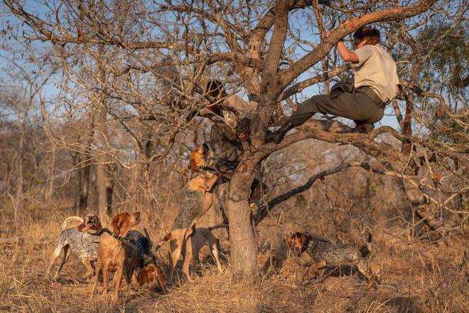 Chó được huấn luyện để bảo vệ động vật hoang dã đã cứu được 45 con tê giác khỏi những kẻ săn trộm - Ảnh 2.
