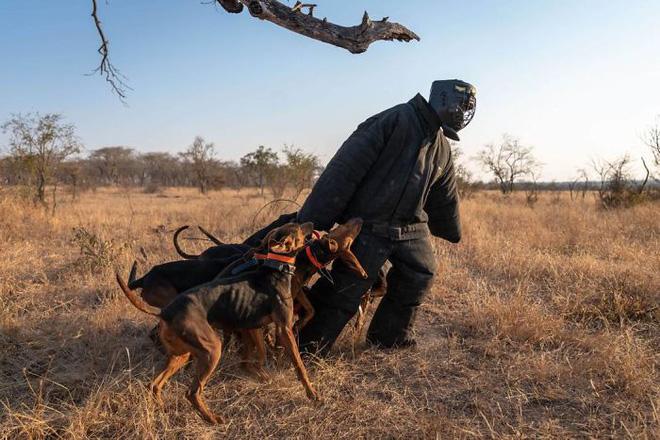 Chó được huấn luyện để bảo vệ động vật hoang dã đã cứu được 45 con tê giác khỏi những kẻ săn trộm - Ảnh 4.