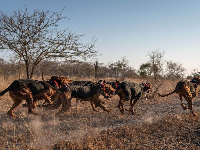 Chó được huấn luyện để bảo vệ động vật hoang dã đã cứu được 45 con tê giác khỏi những kẻ săn trộm - Ảnh 7.