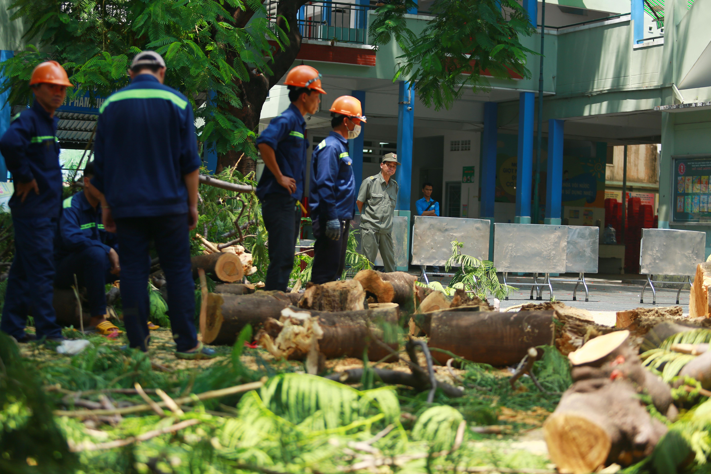 Cận cảnh gốc phượng vĩ mục ruỗng đổ gãy đè 13 học sinh thương vong ở Sài Gòn - Ảnh 2.