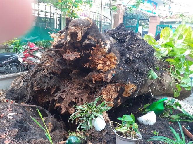 Phụ huynh hoảng loạn, tức tốc bỏ cả làm khi biết cây trong trường đổ khiến 1 học sinh tử vong ở TP.HCM - Ảnh 2.