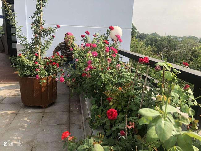 Doanh nhân Sài Gòn trồng cả vườn rau như trang trại và hồ sen trên sân thượng rộng 300m²  - Ảnh 19.