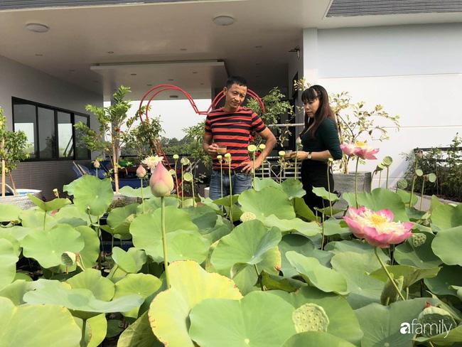 Doanh nhân Sài Gòn trồng cả vườn rau như trang trại và hồ sen trên sân thượng rộng 300m²  - Ảnh 3.
