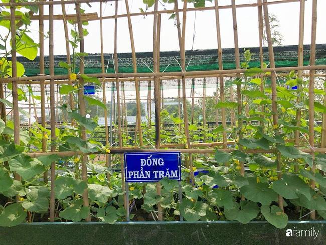 Doanh nhân Sài Gòn trồng cả vườn rau như trang trại và hồ sen trên sân thượng rộng 300m²  - Ảnh 27.