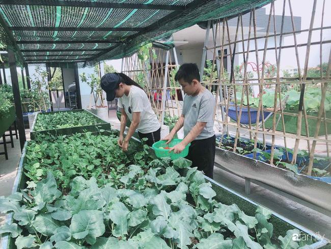 Doanh nhân Sài Gòn trồng cả vườn rau như trang trại và hồ sen trên sân thượng rộng 300m²  - Ảnh 28.