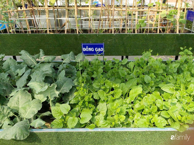Doanh nhân Sài Gòn trồng cả vườn rau như trang trại và hồ sen trên sân thượng rộng 300m²  - Ảnh 6.