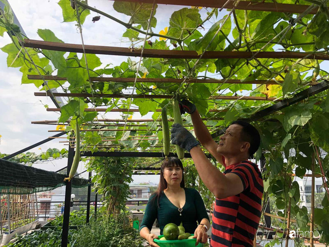 Doanh nhân Sài Gòn trồng cả vườn rau như trang trại và hồ sen trên sân thượng rộng 300m²  - Ảnh 9.