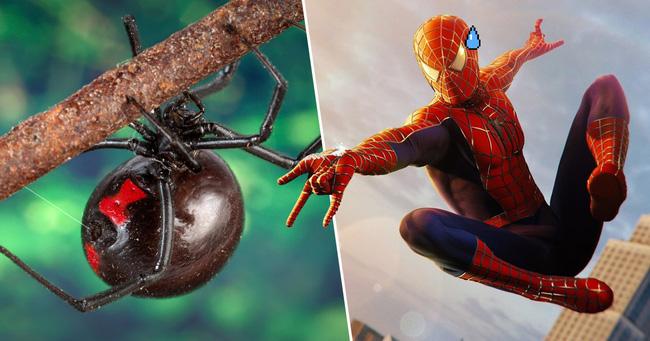 3 anh em tự cho con nhện độc nhất thế giới cắn để biến thành Spider-man - Ảnh 2.