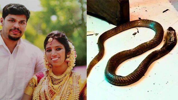 Sợ phải trả lại của hồi môn sau khi ly dị vợ, gã chồng bội bạc âm mưu đuổi cùng giết tận, cho rắn độc cắn chết vợ - Ảnh 2.