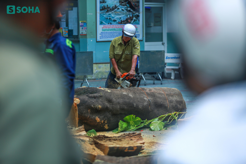 [ẢNH] Toàn cảnh vụ cây phượng bật gốc, đè 13 học sinh thương vong trong 5 giây ở sân trường - Ảnh 6.