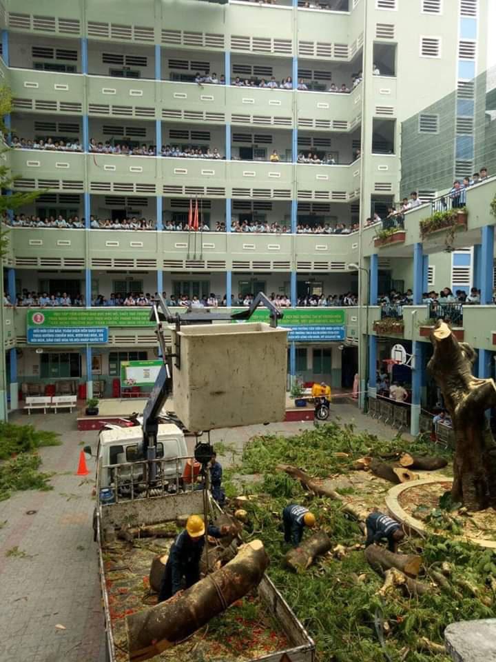 [ẢNH] Toàn cảnh vụ cây phượng bật gốc, đè 13 học sinh thương vong trong 5 giây ở sân trường - Ảnh 9.