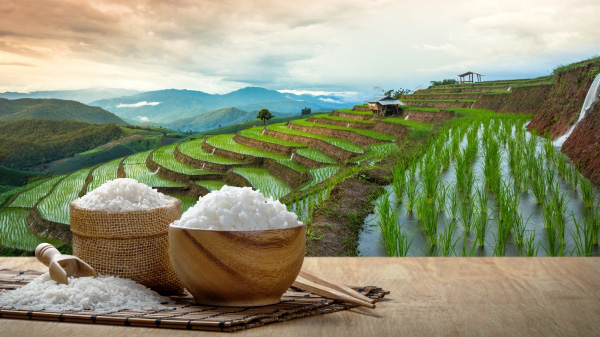 Lúa gạo ăn không hết để mốc hỏng, cả gia đình người đàn ông vẫn chết vì đói: Lý do cảnh tỉnh nhiều người! - Ảnh 2.