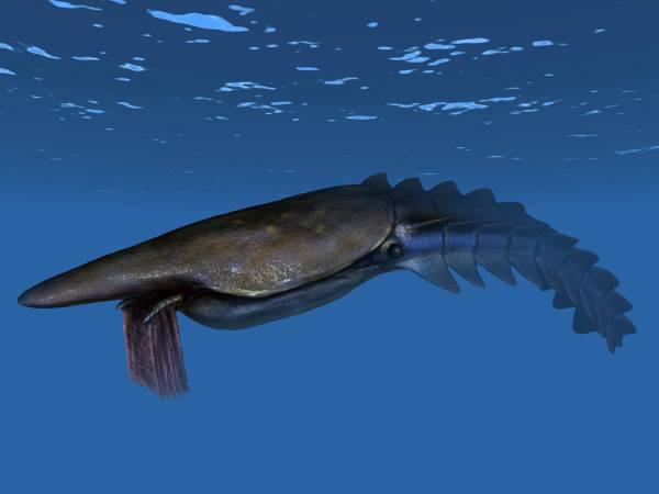 Đàn cá niên đại 50 triệu năm; tôm hùm to hơn người siêu quý hiếm lộ diện đầu tiên trên Trái Đất - ảnh 3