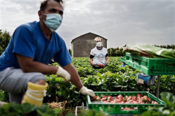 Thất nghiệp vì dịch Covid-19, người Italy bỏ thành thị về quê làm nông - Ảnh 2.