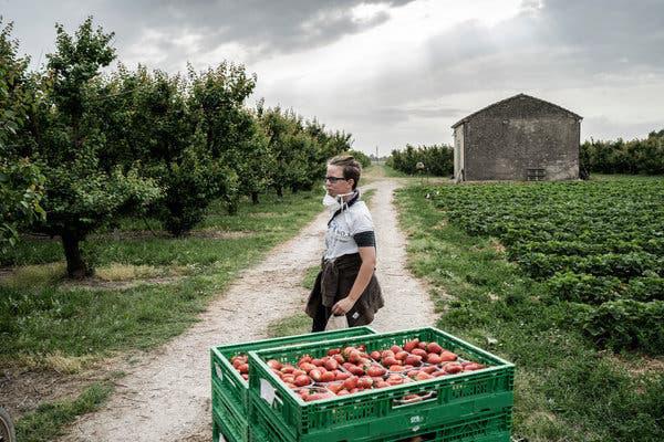 Thất nghiệp vì dịch Covid-19, người Italy bỏ thành thị về quê làm nông - Ảnh 3.