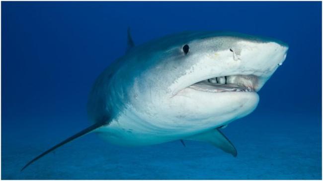 Con cá mập trong thủy cung bất ngờ nôn ra cánh tay người khiến khách tham quan hoảng loạn mở ra vụ án mạng bí ẩn nhất nước Úc - Ảnh 1.