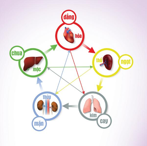 Ngũ vị nhập ngũ tạng: Bí quyết ăn uống giúp nội tạng khoẻ mạnh, cơ thể ít bệnh của Đông y - Ảnh 1.