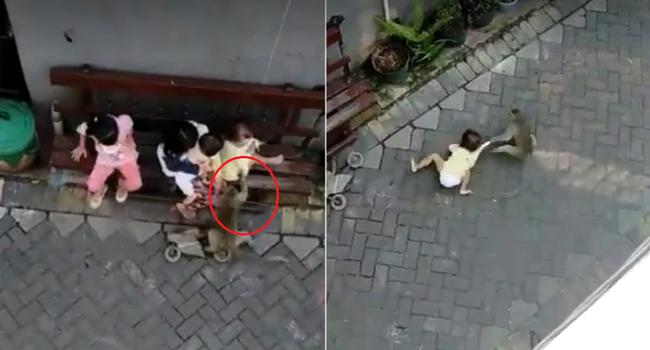 Chú khỉ ngang nhiên bắt cóc đứa trẻ đang ở bên cạnh người lớn rồi kéo lê dưới đất nhưng đằng sau là một câu chuyện đau lòng - Ảnh 3.