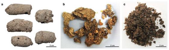 Đây là cách nhận biết một cục phân 7.000 năm tuổi là của chó hay người tiền sử - Ảnh 2.