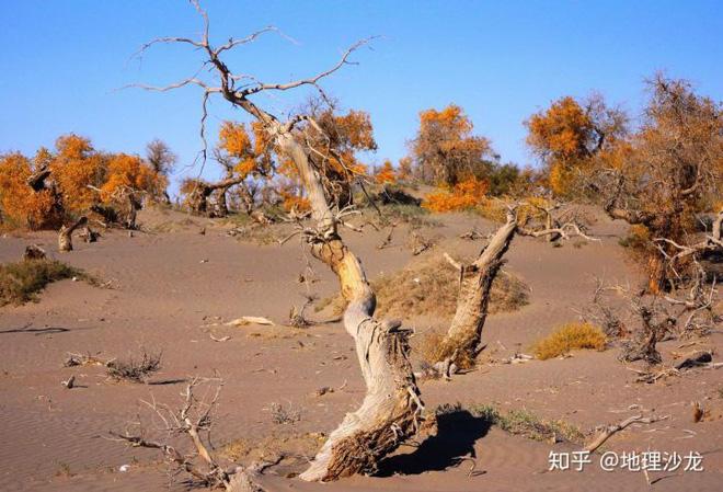 Trồng cây trên sa mạc là tốt hay xấu? - Ảnh 1.