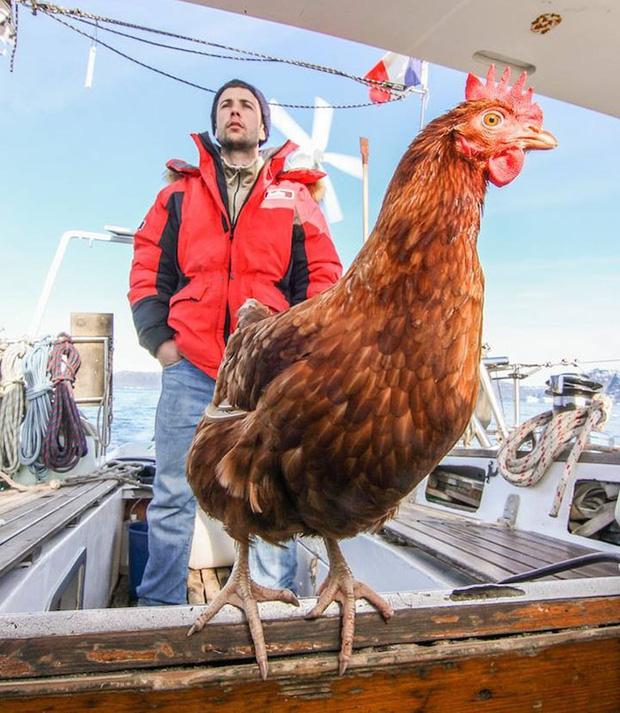 Không cần bạn gái, chàng trai du lịch thế giới cùng gà mái - Ảnh 1.