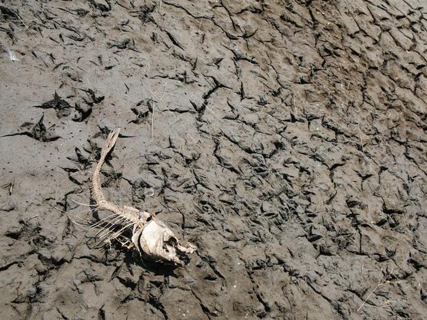 Cảnh báo đỏ: Đại tuyệt chủng lần thứ 6 đang diễn ra nhanh hơn nhiều so với mọi dự báo, lỗi hoàn toàn do con người - Ảnh 2.