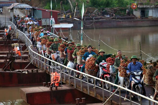 """Vải thiều Bắc Giang vào vụ, dân gồng mình chở hàng tạ vải chòng chành qua chiếc cầu phao """"tử thần"""": """"Ngã lộn xuống sông là chuyện bình thường"""" - Ảnh 1."""