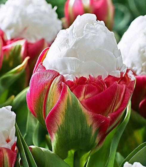 Ngỡ ngàng loài hoa lạ khi nở giống hệt cây kem, nhìn là muốn ăn - Ảnh 5.
